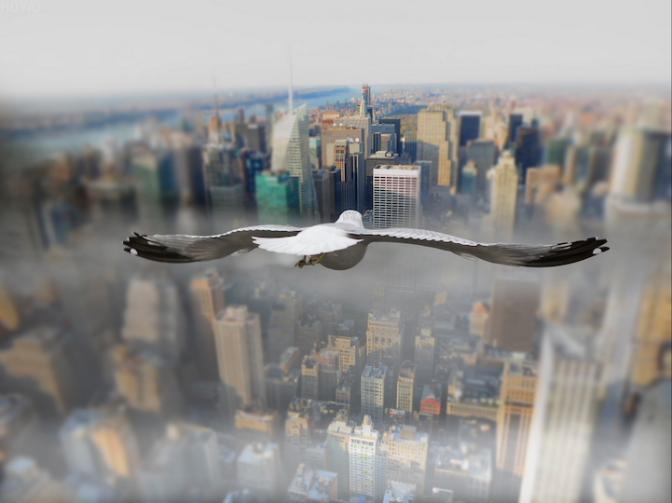 Inacreditáveis imagens de aves