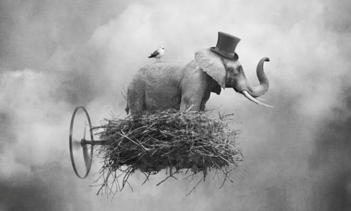 elefante voador