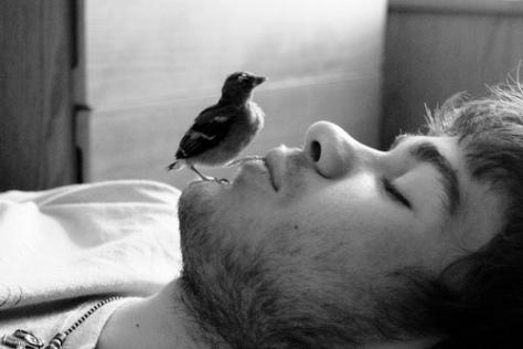 _aboy-bird
