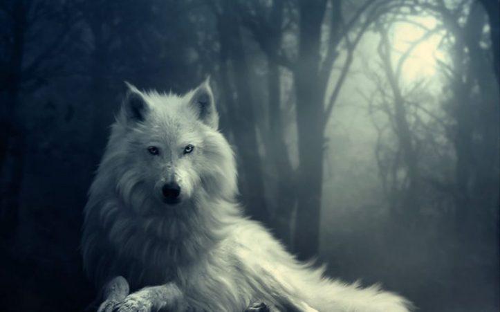 lobo-blanco-en-la-noche