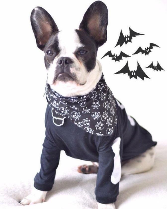 Halloween Pet beneficente promete matar curitibanos de fofura